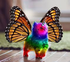 Rainbow Unicorn Butterfly Kitten